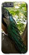 In The Shadows IPhone Case by Peggy J Hughes