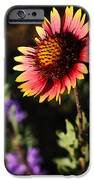 Indian Blanket IPhone 6s Case by Thomas Pettengill