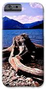 King Of The Driftwood IPhone 6s Case by Garren Zanker