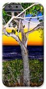 Ko Olina Tree In Sunset IPhone 6s Case