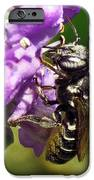 Leaf Cutter Bee IPhone 6s Case