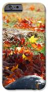 Leaves Falling IPhone 6s Case
