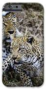 Leopard Tease IPhone 6s Case