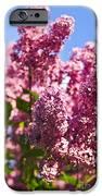 Lilacs IPhone Case by Elena Elisseeva