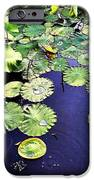 Lilly Pad IPhone 6s Case