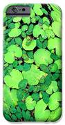 Lily Pads On Black IPhone 6s Case by Annette Allman
