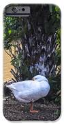 Lone Duck IPhone 6s Case by Lisa Cortez
