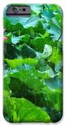 Lotus Bloom  IPhone 6s Case