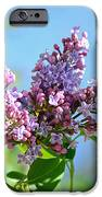 Love My Lilacs IPhone 6s Case by Lori Tambakis