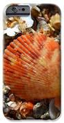 Macro Shell On Sand IPhone 6s Case by Riad Belhimer