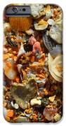 Macro Shells On Sand3 IPhone 6s Case by Riad Belhimer