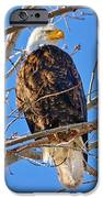 Majestic Bald Eagle IPhone 6s Case by Greg Norrell