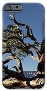 Manzanita IPhone 6s Case by Kenneth Hadlock