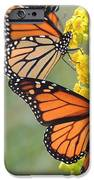 Monarch Gathering IPhone 6s Case by Laurence Van Oliver