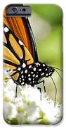 Monarch Moment IPhone 6s Case by Lori Tambakis