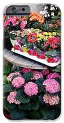 Montpellier Flower Shop IPhone 6s Case by Victoria Herrera