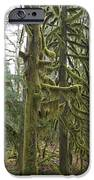 Mossy Trees IPhone 6s Case