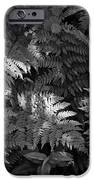 Mountain Ferns 1 IPhone 6s Case by Roger Snyder