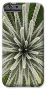 My Giant Sago Palm IPhone 6s Case