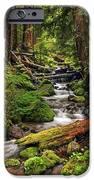 Nature's Art IPhone 6s Case by Pamela Winders