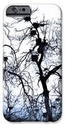Chaos Is Nesting IPhone 6s Case by John Grace