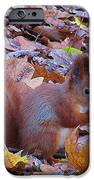 Nuts About Nuts IPhone 6s Case by Halyna  Yarova
