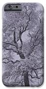 Oak In Snow IPhone 6s Case by Don Perino