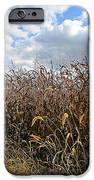Ohio Corn IPhone 6s Case by Andrea Dale
