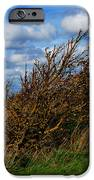 On Beachy Head Plants Bow To The Wind IPhone 6s Case by John Magnet Bell