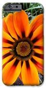 Orange IPhone 6s Case by Saifon Anaya