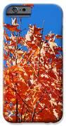 Orange Sky IPhone 6s Case by Lorena Mahoney