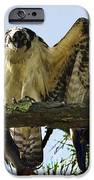 Osprey Mullet Sushi Brunch IPhone 6s Case