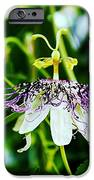 Passion Flower IPhone 6s Case