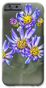 Passion IPhone 6s Case by Joe McCormack Jr