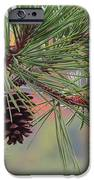 Peaceful Pinecone IPhone 6s Case by Stephen Melcher