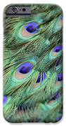 Peacock Feathers IPhone 6s Case by T C Brown