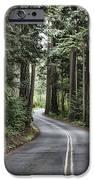Pine Trees IPhone 6s Case