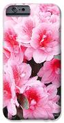 Pink Azalea In Bloom IPhone 6s Case by Halyna  Yarova
