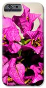 Pink Bougainvillea Classical IPhone 6s Case