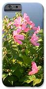 Pink Flowers By The Lake IPhone 6s Case