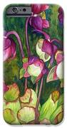 Pitcher Plant Flowers IPhone 6s Case by Helen Klebesadel