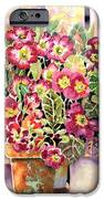 Primroses In Pots IPhone 6s Case by Ann  Nicholson