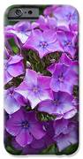 Purple Royale IPhone 6s Case by Kimberly Ayars