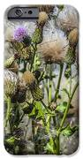 Purple Thistle IPhone 6s Case by Gerald Murray Photography