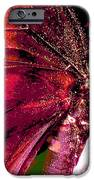 Purple Wings Two IPhone 6s Case by Walter Klockers