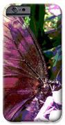 Purple Wings IPhone 6s Case by Walter Klockers