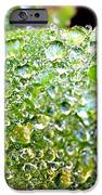 Lambs Ear Raindrops IPhone 6s Case by Candice Trimble