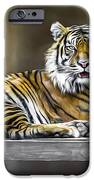 Ranu The Sumatran Tiger IPhone 6s Case by Shannon Rogers