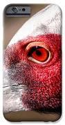 Red Eye Flight IPhone 6s Case by John Grace