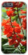 Red Flower IPhone 6s Case